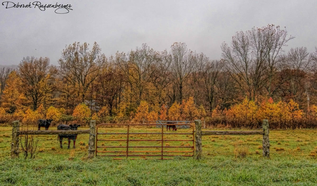 Autumn at the Ranch