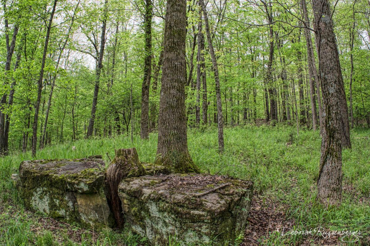 Ozark Woods