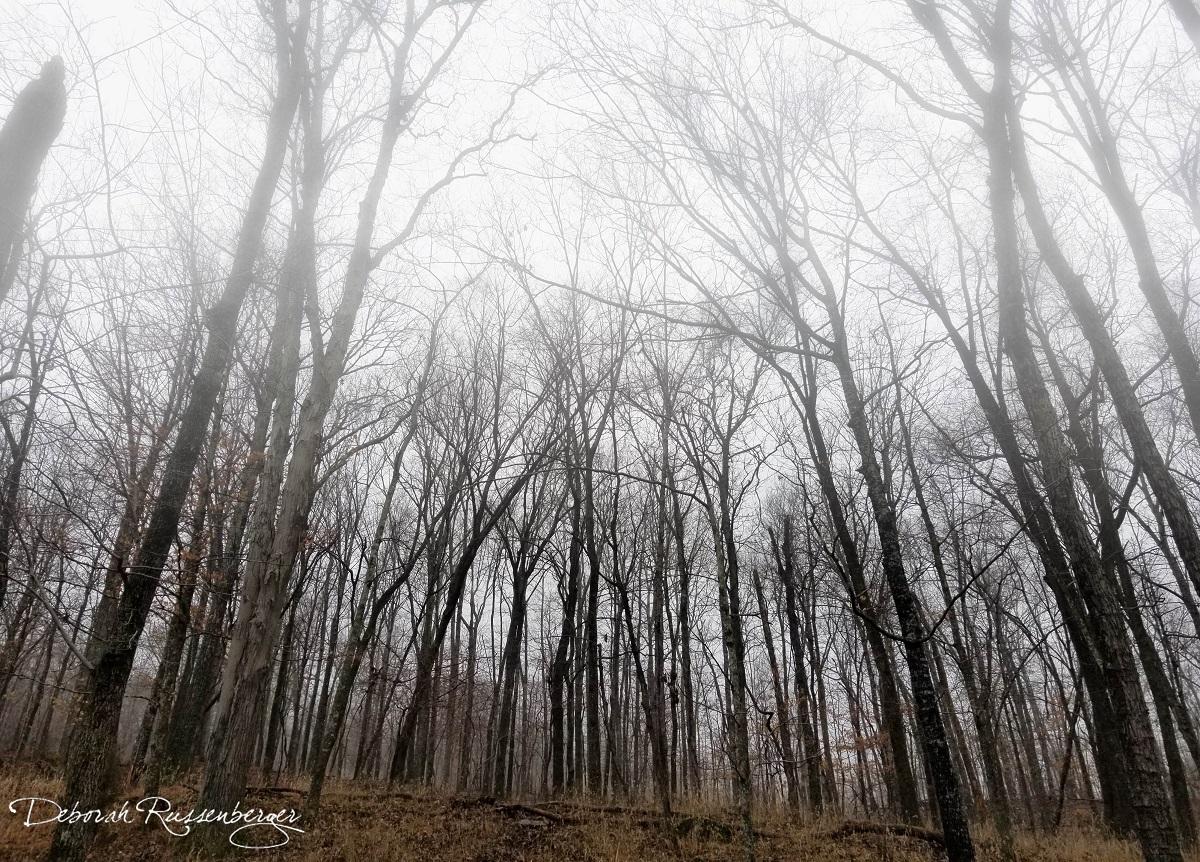 Ozark Fog