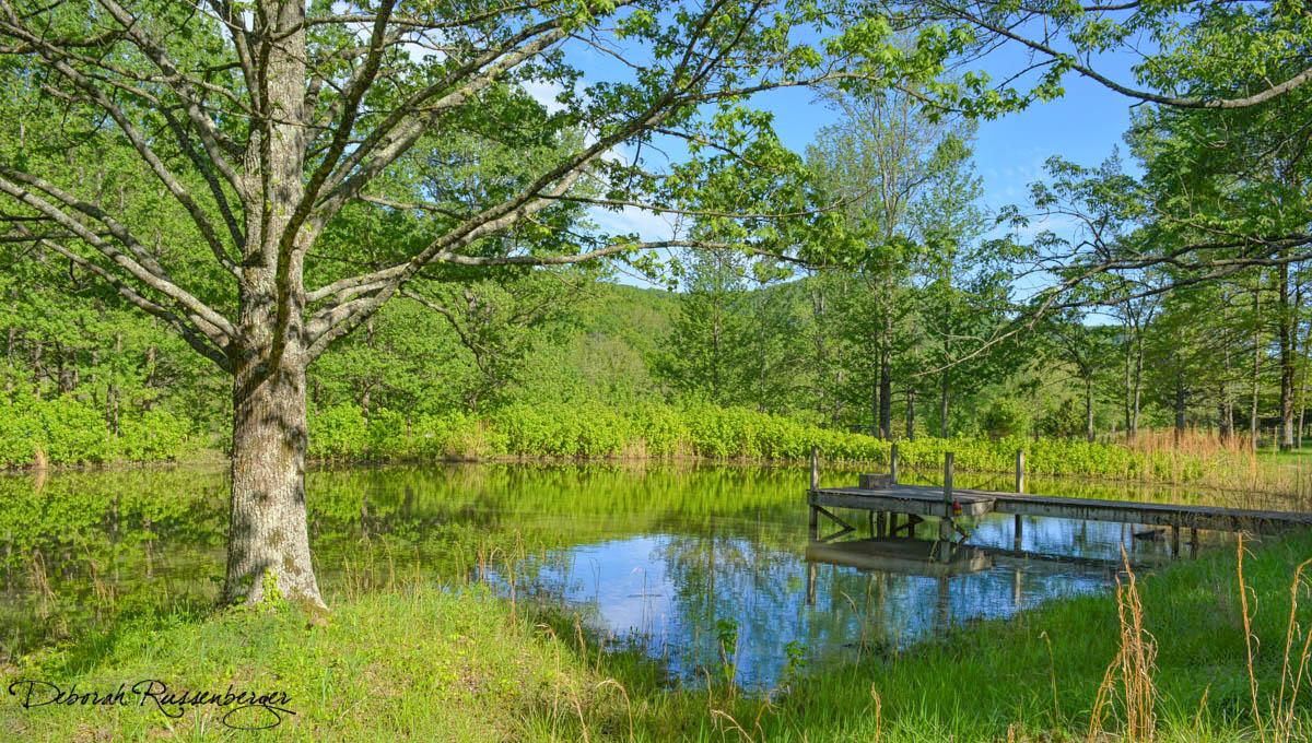 Pond in the Spring
