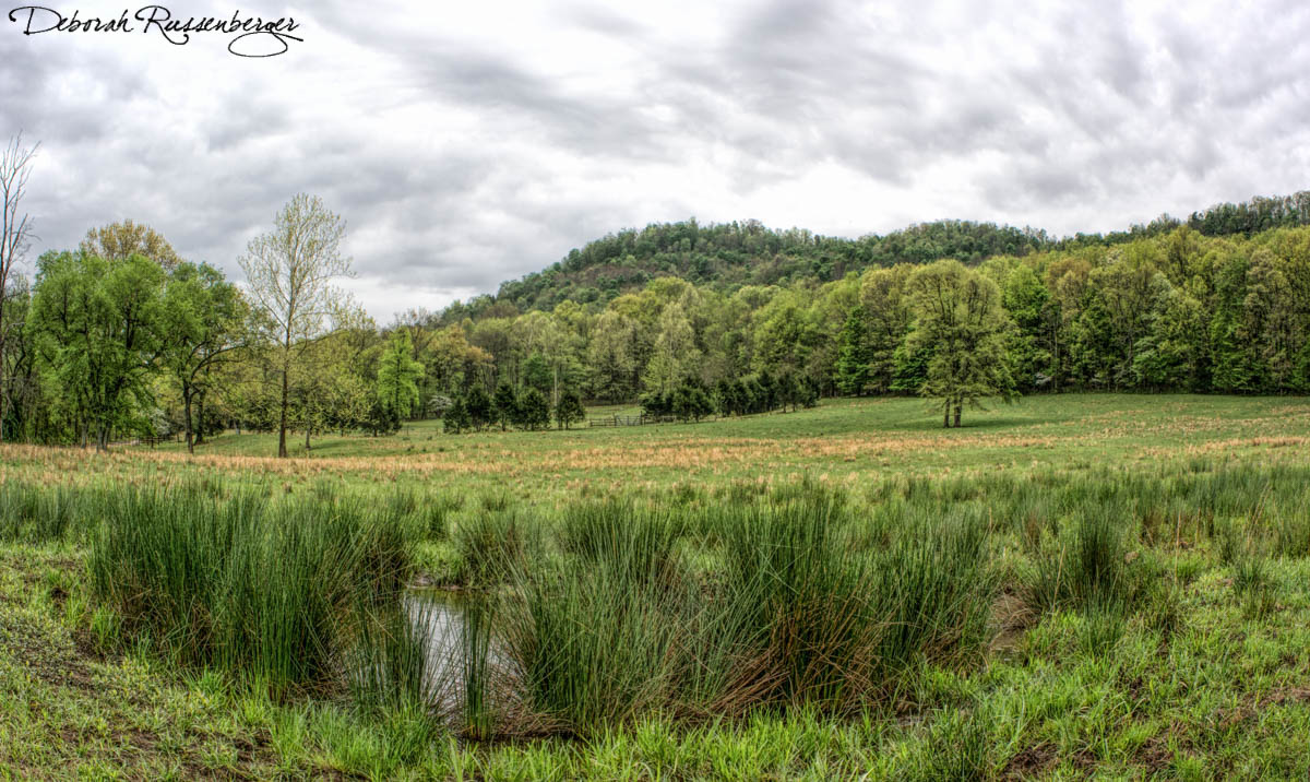 Reed Field with Pond