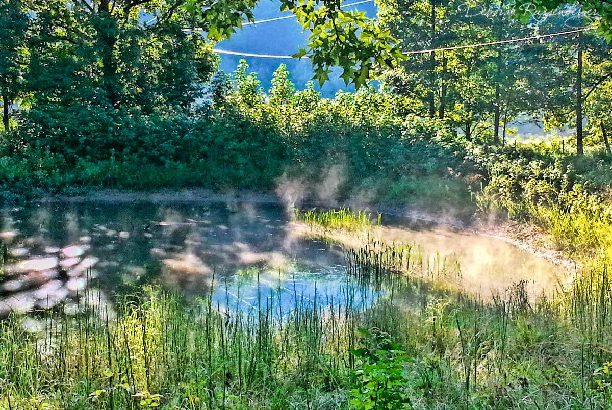 Steamy Pond
